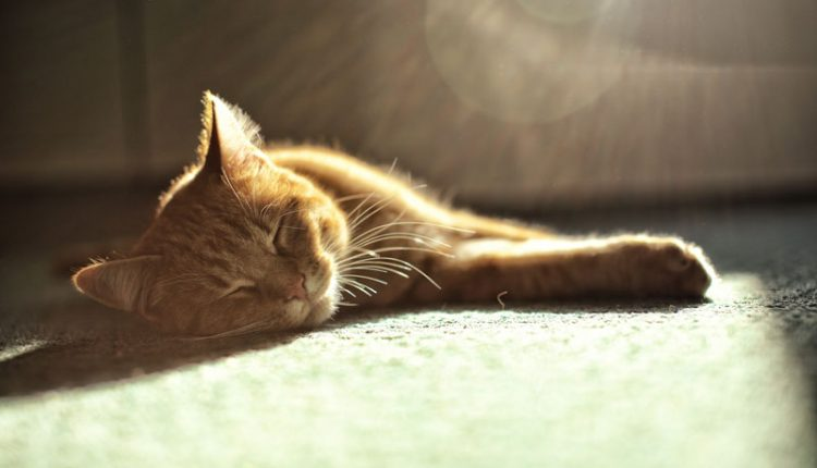 Cat Carpet Sunlight