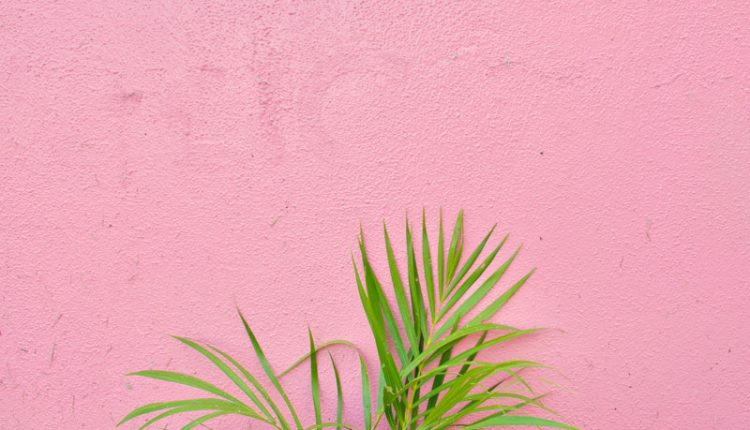 Pink Tropical Wall